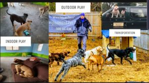 NPC Doggie Daycare